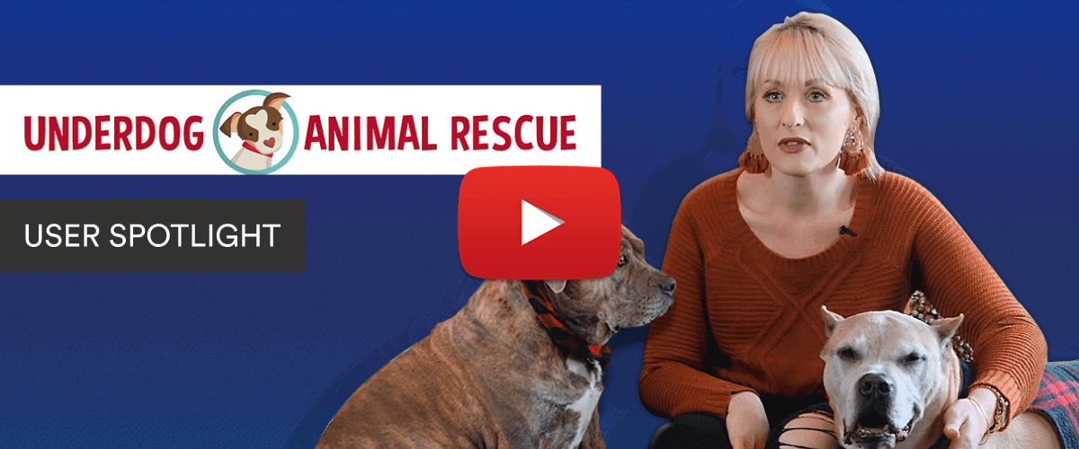 How an animal rescue connects people with dogs